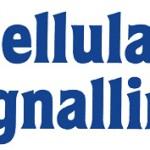 cellular_signalling